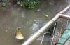 Việt kiều bị cá sấu cắn chết khi đi câu