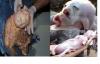 Những trường hợp động vật đẻ con có khuôn mặt giống...người