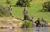 Liều mạng đối đầu voi mẹ để cứu voi con