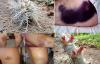 Tận mục loài sâu róm cực độc giết người bằng bộ lông ma quái