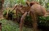 Phát hiện loài nhện to bằng chó con