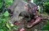 Phẫn nộ hình ảnh voi bị chặt đầu, cướp ngà ở Trung Quốc