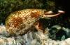 Bé 7 tuổi ăn ốc biển bị tử vong: Nước mắt của người cha