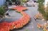Hơn 1000 học sinh Đà Lạt xếp hình bản đồ, cờ Tổ quốc