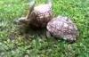Rùa trắng tìm cách cứu bạn bị lật ngửa gây sốt dân mạng