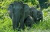 Cặp vợ chồng bị voi giẫm chết vì chụp ảnh trong vườn thú
