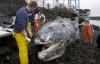 Xác cá voi khủng phân hủy bốc mùi tại bến phà Washington