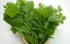 Đời sống - Những lý do khiến bạn nên ăn rau mồng tơi thường xuyên