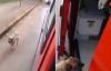 Chú chó thông minh đi theo xe cấp cứu chở chủ vào bệnh viện