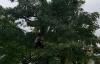 Bật cười khi CSGT núp vườn chuối, ngọn cây, nóc nhà để bắn tốc độ