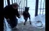 Video: Chú chó leo cầu thang bằng hai chân như người