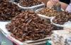 Ghê rợn với những món ăn từ đặc sản côn trùng trên thế giới