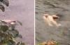 Vụ cô gái mặc nội y chết dưới suối: Nhiều tình tiết lạ