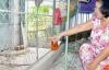Trộm đặt ống nhựa, bơm thuốc gây mê vào nhà dân