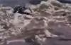 Video: Sư tử xuống sông bắt mồi bị cá sấu