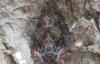 Xôn xao bướm đen hình mặt Phật xuất hiện ở Hà Nội