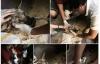 Giải trí - Dân mạng xúc động vì chú chó bị hoại tử Bến Tre được cứu chữa kịp thời
