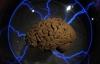 Phát triển thành công não nhân tạo giống 99% não thật