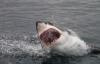 """Cậu bé 14 tuổi """"chiến đấu"""" với cá mập giữa biển"""