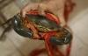 Quấn dây thừng 31m để tăng cân nặng cua biển