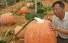 """Bí ngô """"khủng"""" to như cái ô, giá 2 triệu/quả ở Lâm Đồng"""