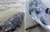 Phát hiện sinh vật biển kì lạ mõm giống cá sấu ở Trung Quốc