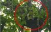 Video nam thanh niên nghi ngáo đá cố thủ trên cây suốt 11 tiếng