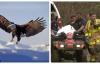 Đời sống - Máy bay đâm trúng đại bàng khiến 4 người thiệt mạng