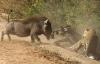 Video: Những cuộc chiến sinh tồn khốc liệt trong thế giới động vật