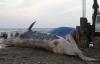 Khoảnh khắc kéo xác cá voi nặng khoảng 8 tấn lên bờ an táng ở Nghệ An