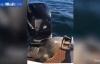 Bị cá kình truy sát hải cẩu nhảy lên thuyền ngư dân thoát thân ngoạn mục