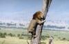 Tai nạn hài hước của chúa tể rừng xanh khi săn mồi