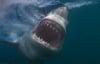 Cá mập trắng phi khỏi mặt nước đớp mồi trong chớp mắt