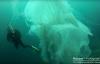 Thợ lặn đối mặt sứa