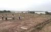 Hà Nội: Vườn nhãn rộng 3.500m2 của người dân bị đối tượng lạ san phẳng