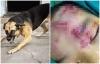 Nam Định: Bé gái 6 tuổi bị chó nhà 30kg cắn trọng thương vùng mặt