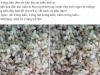 Sợ stress: Dân Hà Thành sốt ăn trứng kiến gai đen