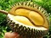 Những tác hại khôn lường khi ăn sầu riêng sai cách