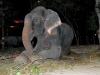 Nước mắt chuyển thành nụ cười của chú voi bị cầm tù suốt 50 năm