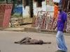 Đại dịch Ebola: Người chết bị ném ra đường gây chấn động thế giới