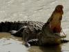 Cận cảnh đảo cá sấu nơi 1.000 binh lính Nhật đi qua còn 20 người sống