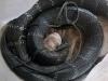 Hổ mang chúa 3,1 m được đưa về trại rắn 'dưỡng thương'