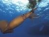 'Quái vật' mực khổng lồ điên cuồng tấn công tàu ngầm