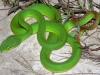 Ủy ban xã 'mua' rắn lục đuôi đỏ với giá 20.000 đồng