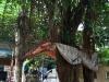 Làm rõ nguyên nhân thanh niên tự tử bên gốc cây