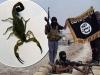 IS dội bom chứa bọ cạp sống gây hoảng loạn Iraq