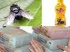 'Con ruồi giá nửa tỷ': Tân Hiệp Phát lên tiếng lúc này có phải là khôn ngoan?