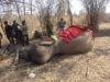 Bị một nhát chém vào đùi, voi nhà ngậm chặt miệng 2 ngày rồi chết
