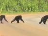Video: Thú vị cảnh tinh tinh quan sát cẩn thận khi qua đường