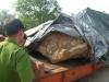 Đào được đá khủng 30 tấn: Mức phạt vô lý, chủ vườn có thể khởi kiện